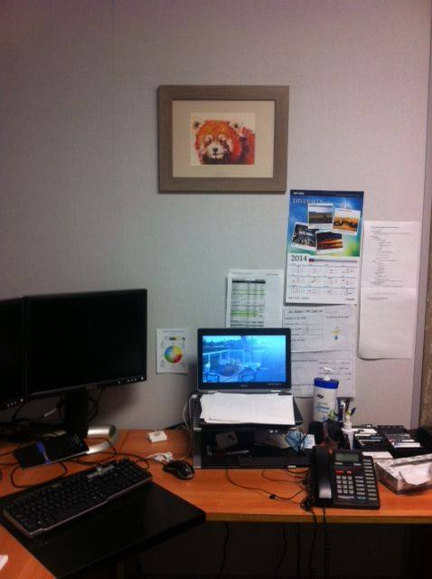 Ernest's red panda