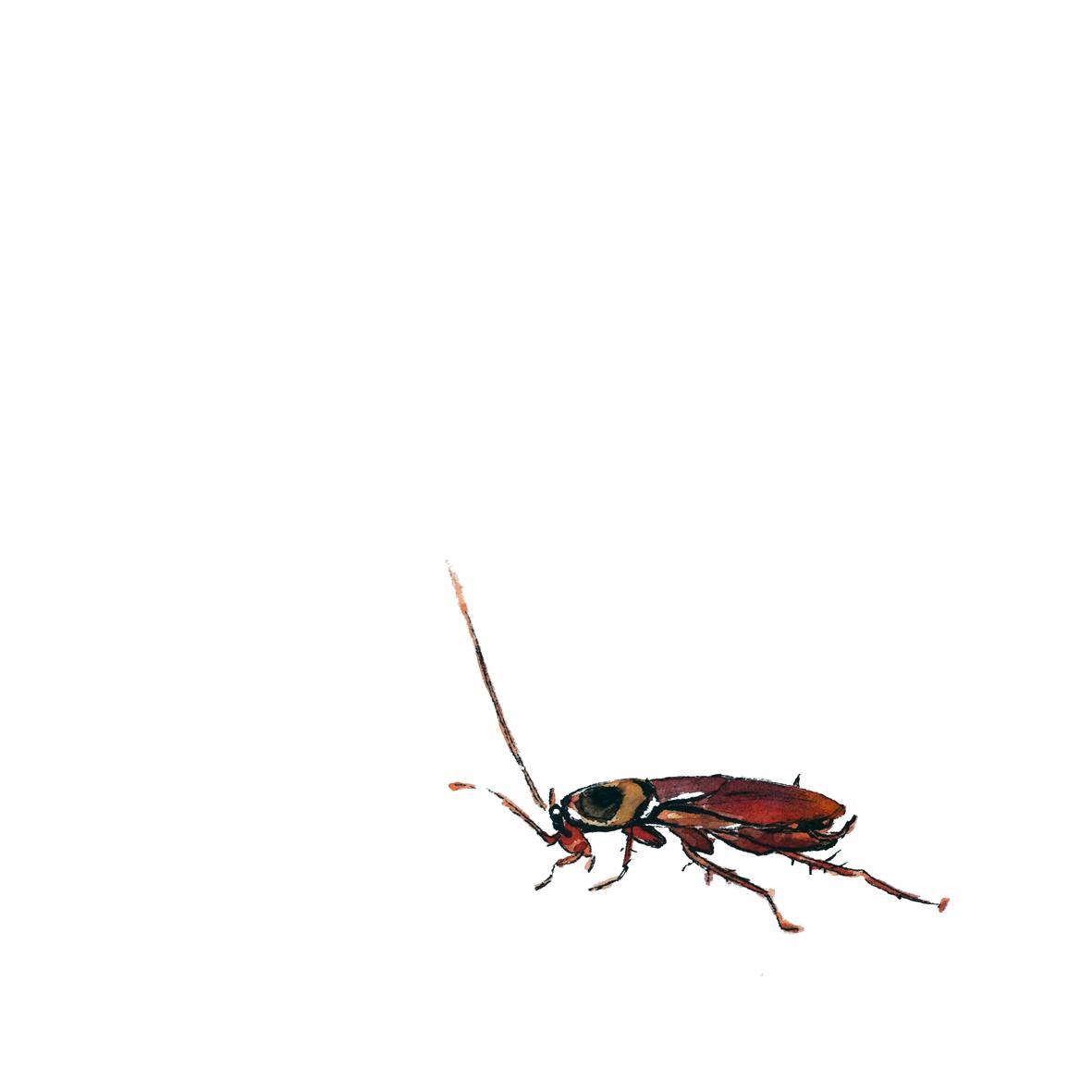 cockroach-gloriaho.jpg