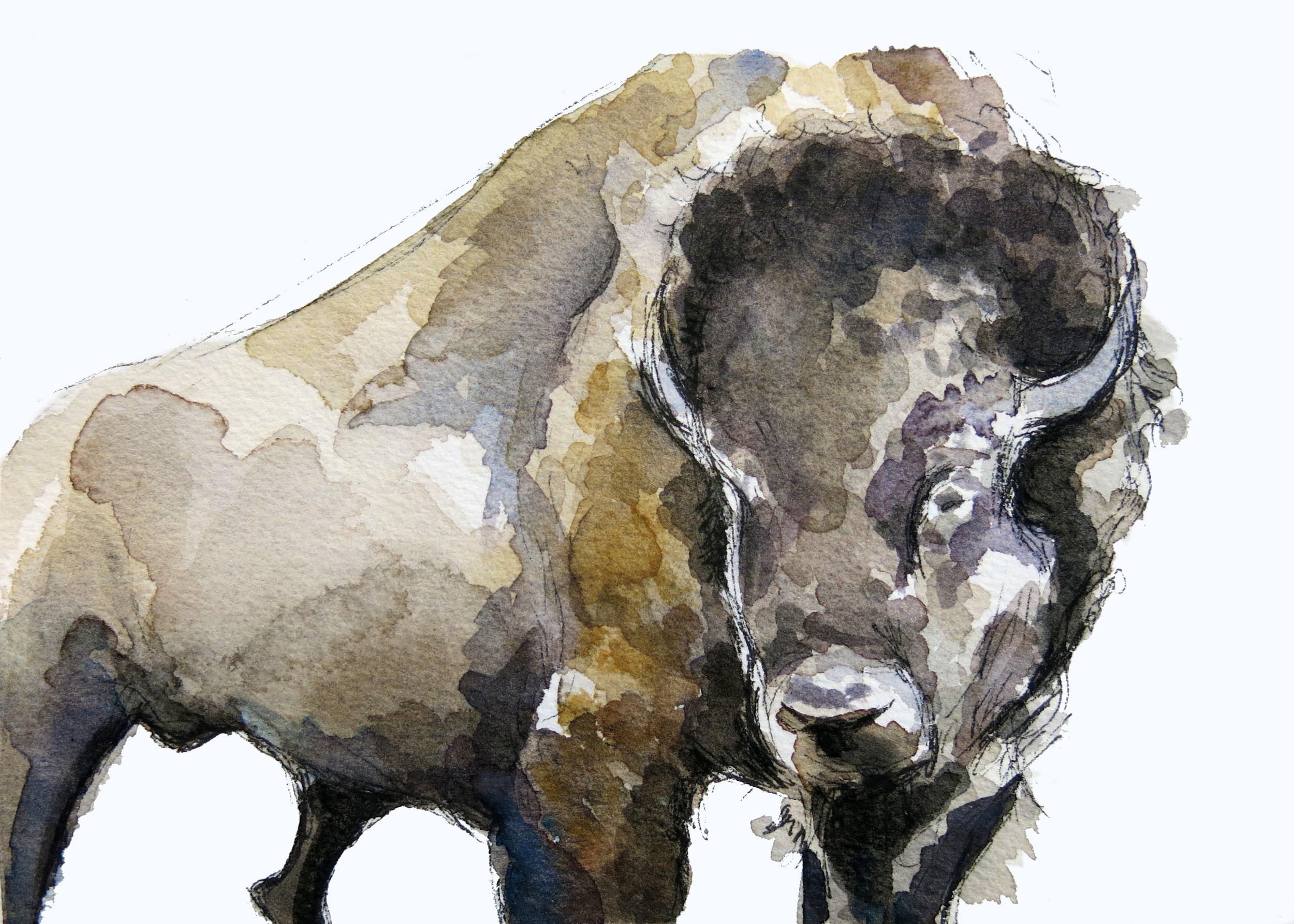 Bison Body(ORIGINAL SOLD)
