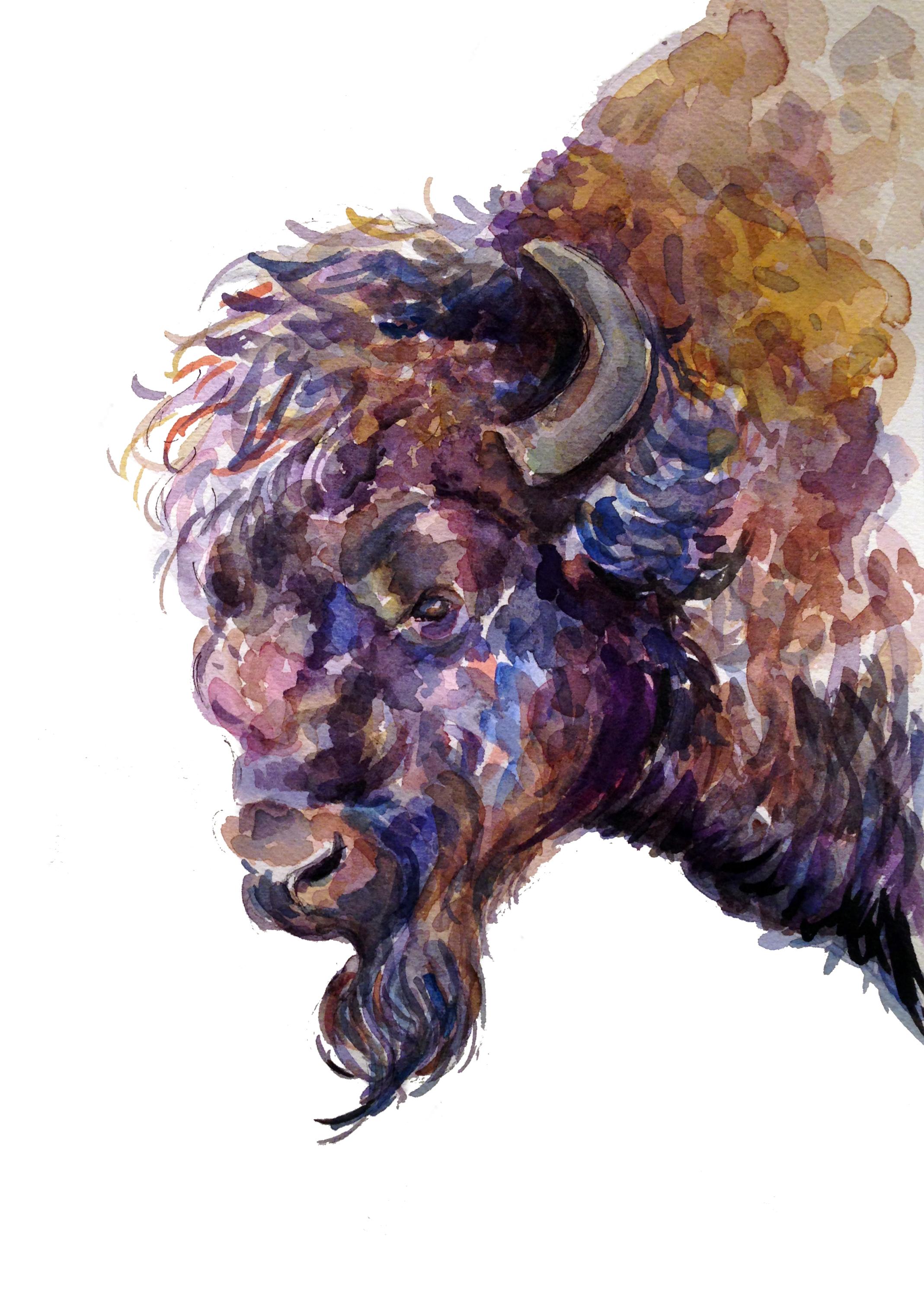 Bison Profile(ORIGINAL SOLD)