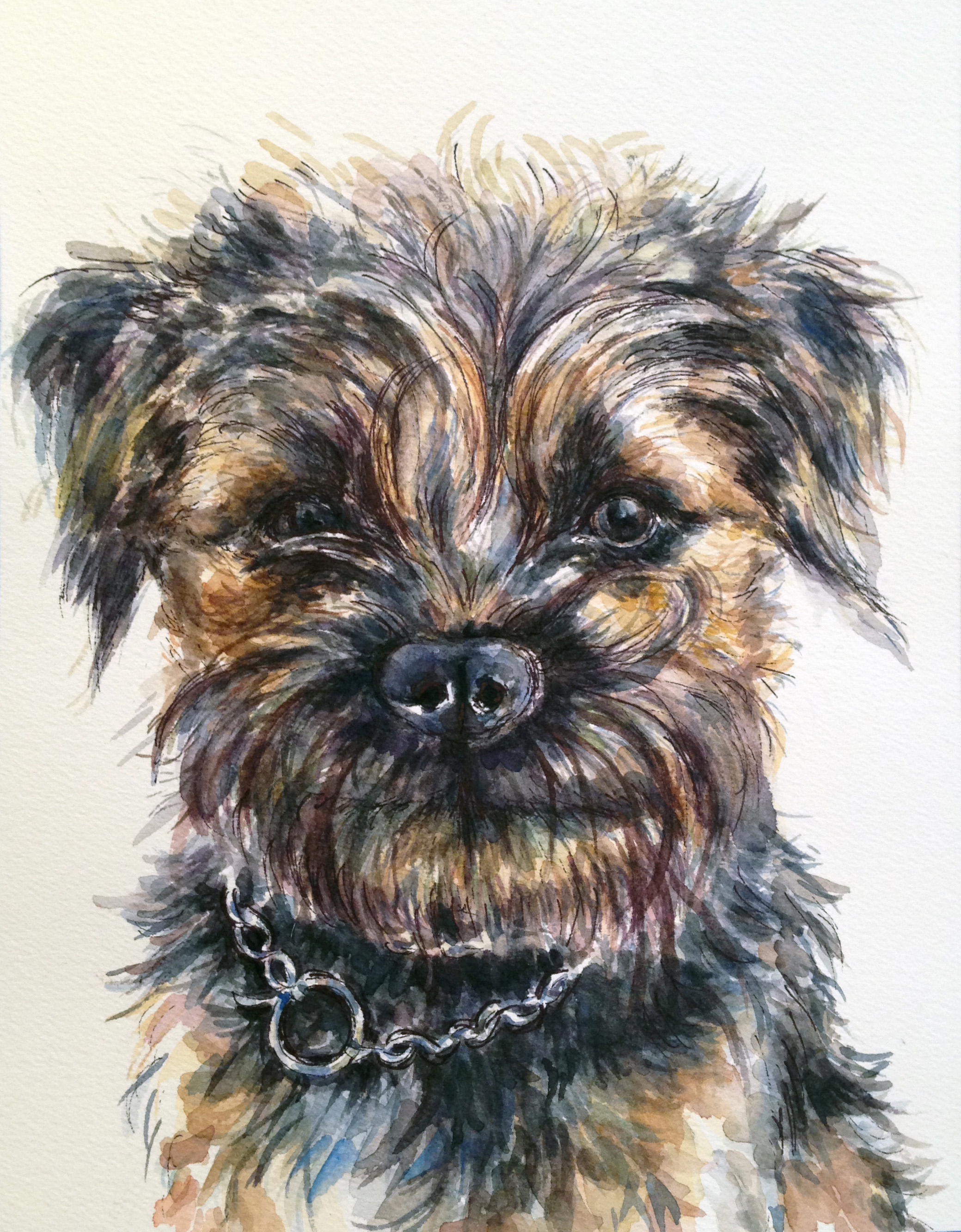 Chief, the border terrier