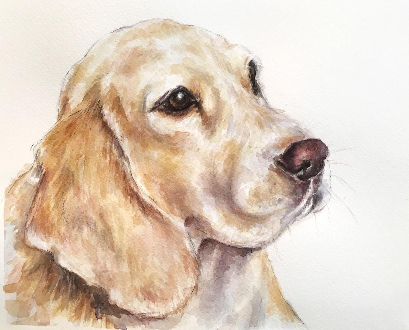 A beagle named Tagan