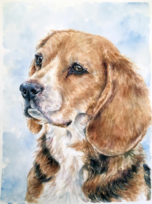 Riley the beagle