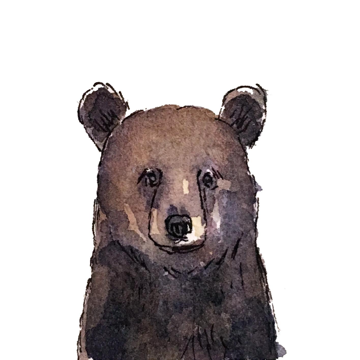 Mini black bear