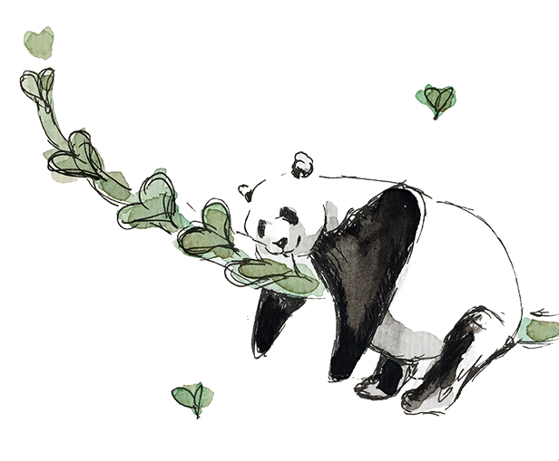 Panda bamboo love