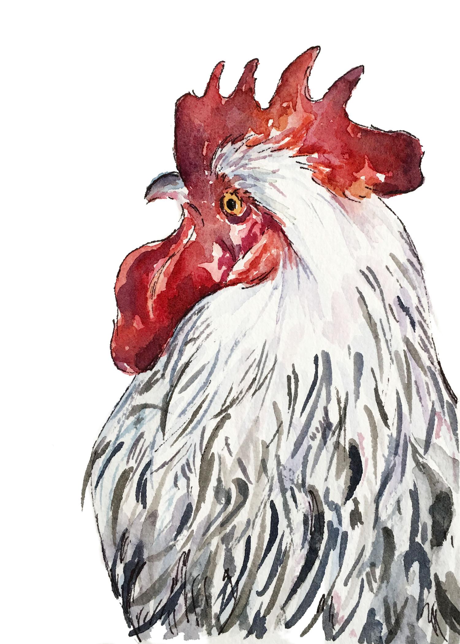 Chicken-5x7.jpg