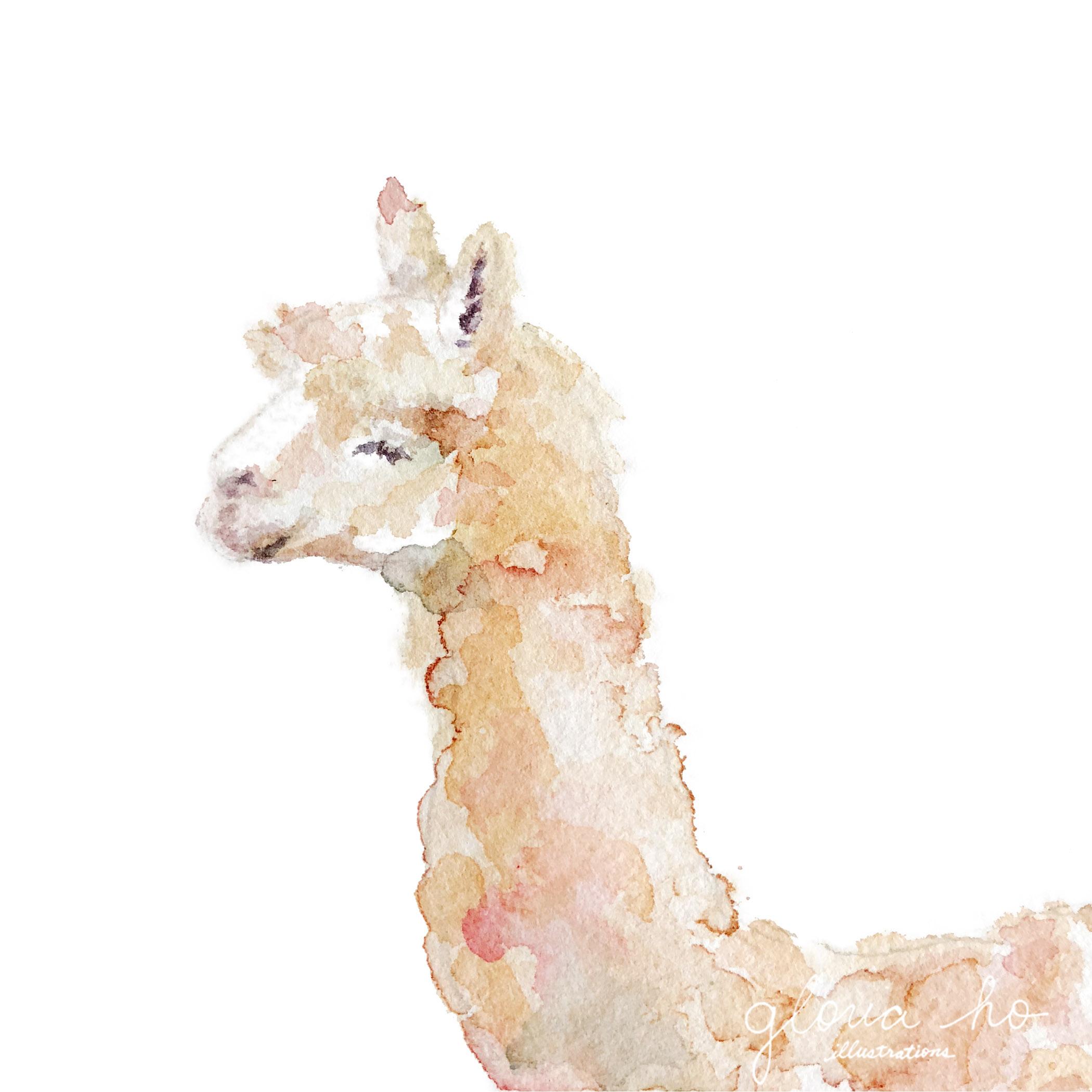 Alpaca-web.jpg