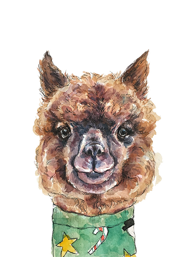 Alpaca-xmas-web.jpg