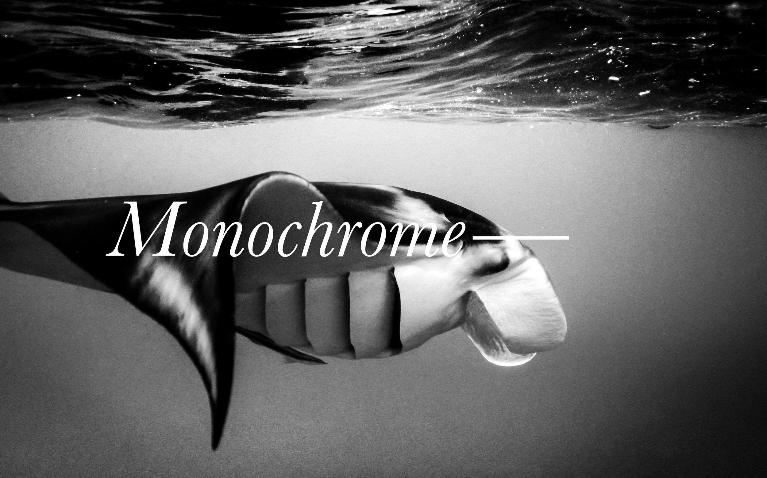Monochroms.jpg
