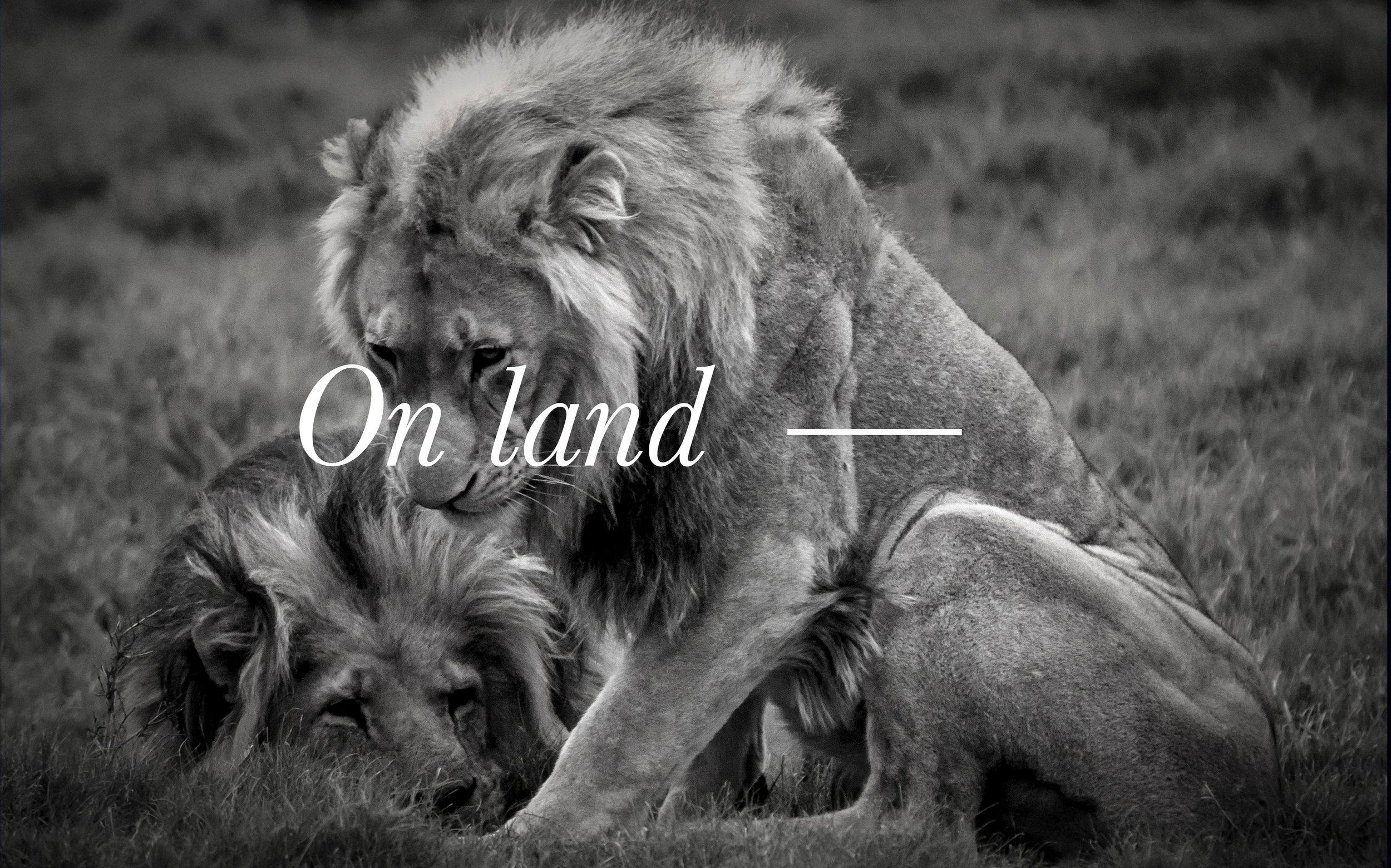 On land2.jpg