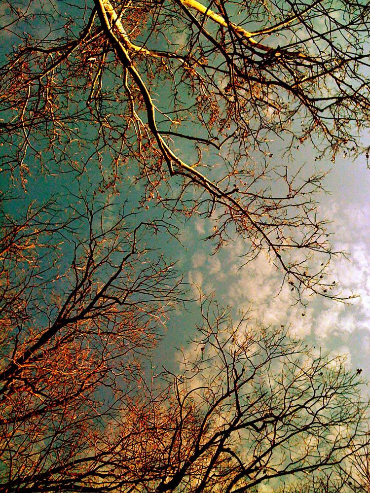 3-Branches.jpg