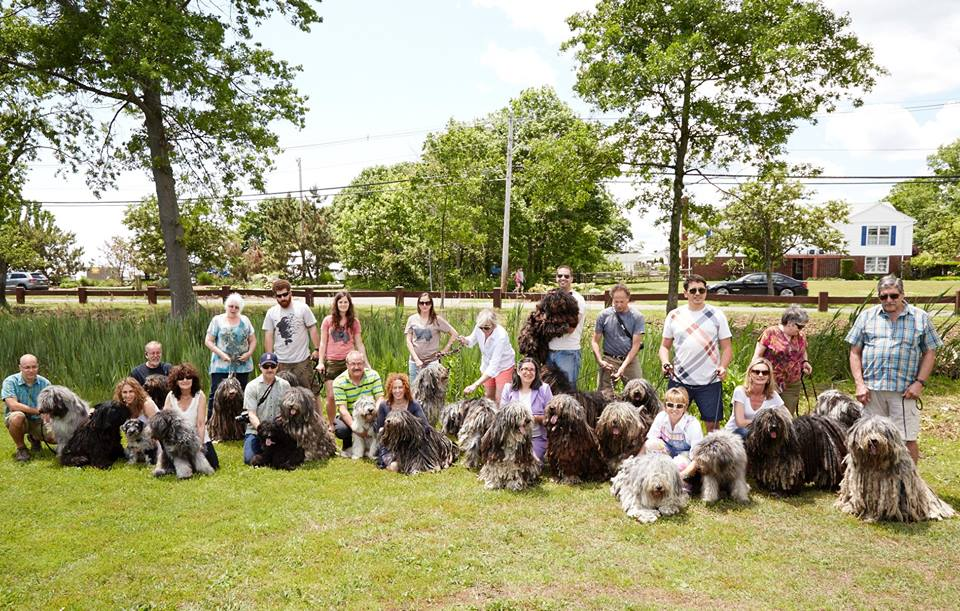 Bergamasco of all ages and their owners attended the successful sunny weekend event.