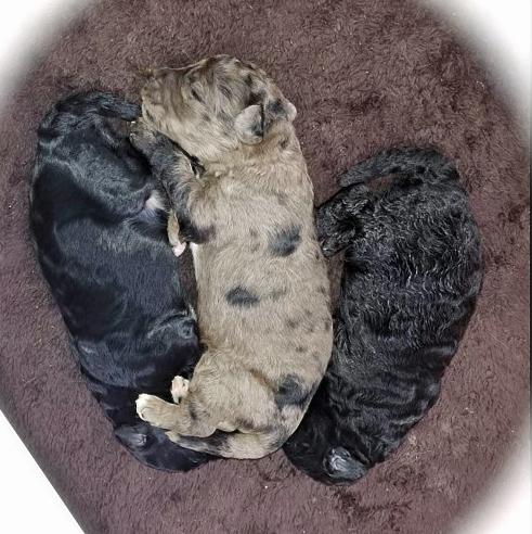 little 3 puppies 2 Kopie.jpg