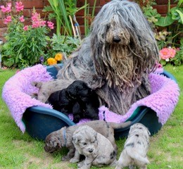 Cicci and pups