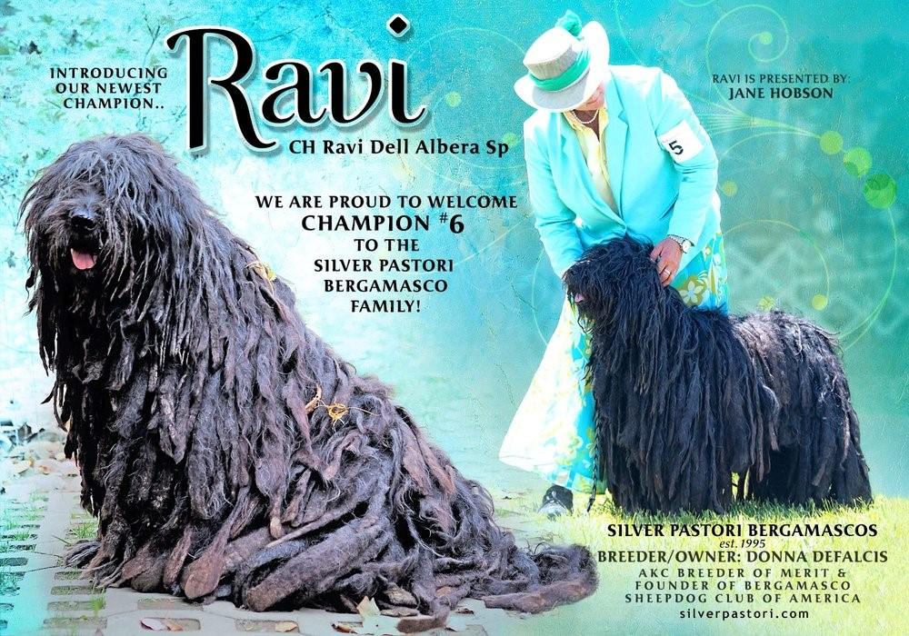 Ravi Champion 1.jpg
