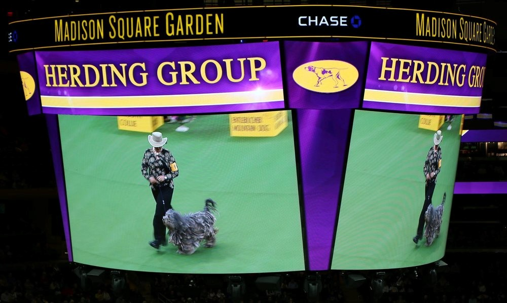 Whope - Madison Square Garden - in competiton to the best of group