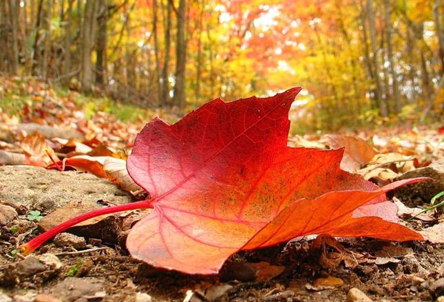 masaje otoño publi taller web.jpg