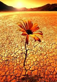 resiliencia.jpg