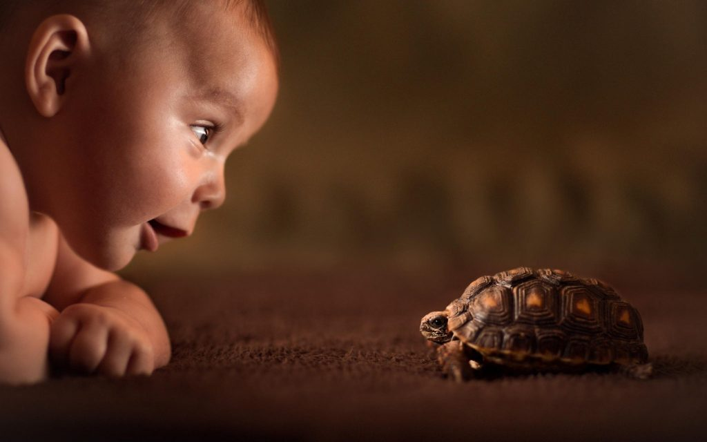 baby-turtle-curiosity-friend-childwood-explore-photo-hd-wallpaper-1024x640.jpg