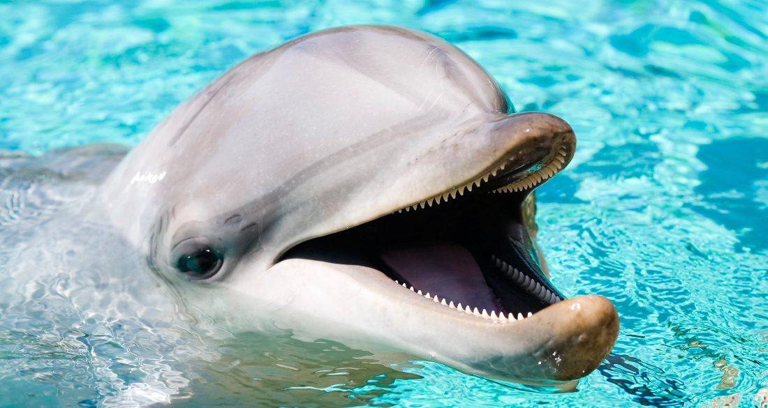 delfin-comun-o-delphinus-delphis.jpg