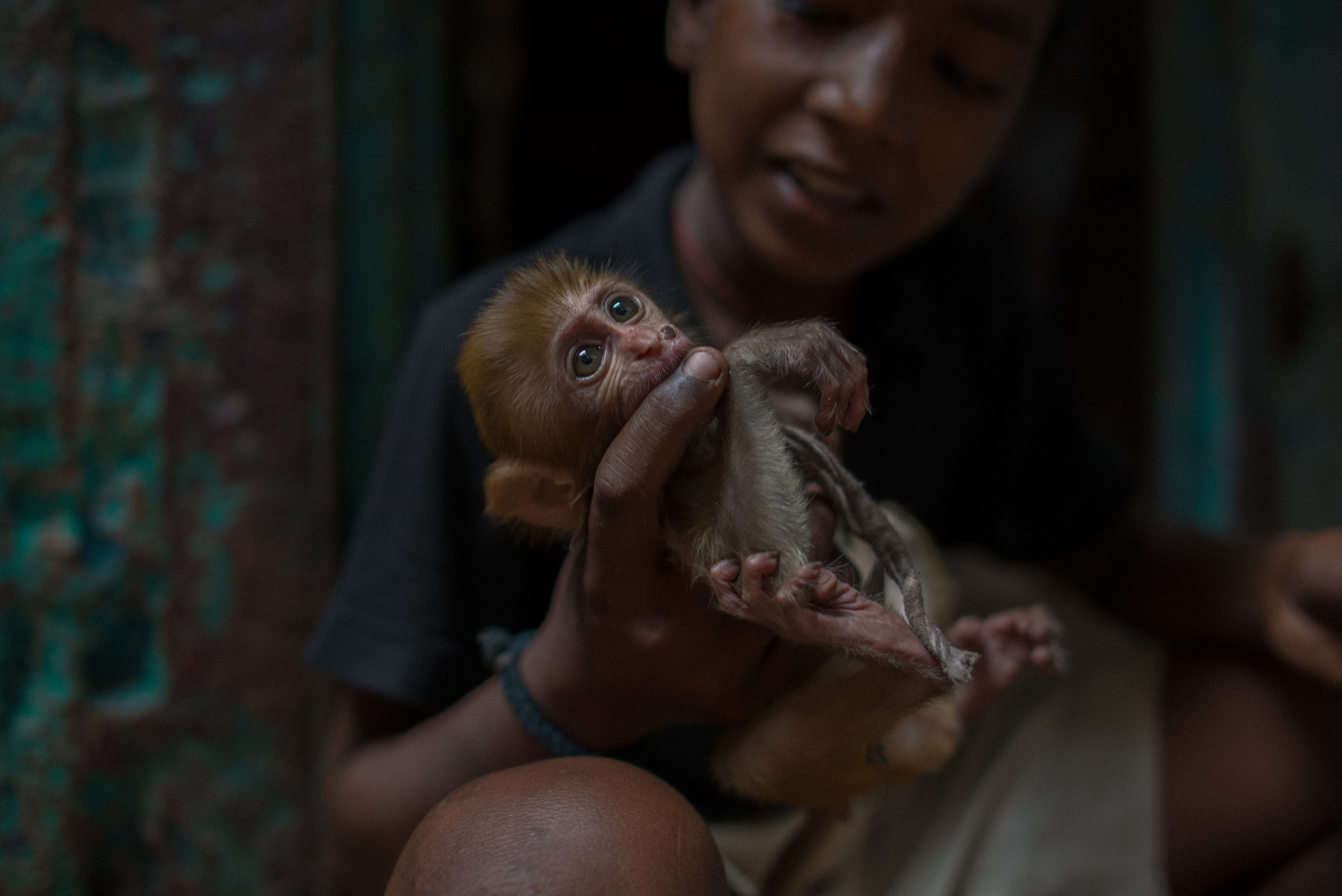 Boy with pet monkey