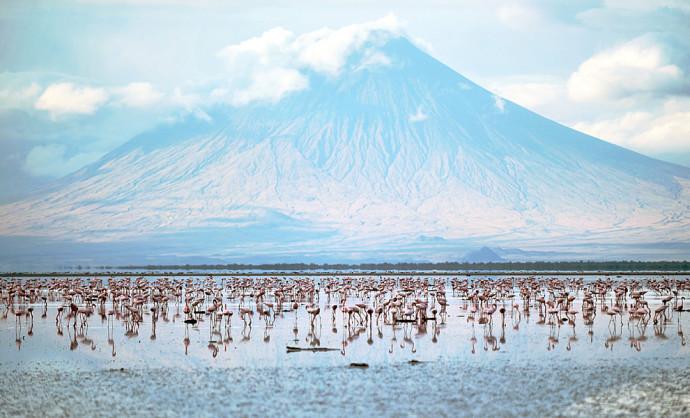 flamingos-lake-natron-breeding-ground.jpg