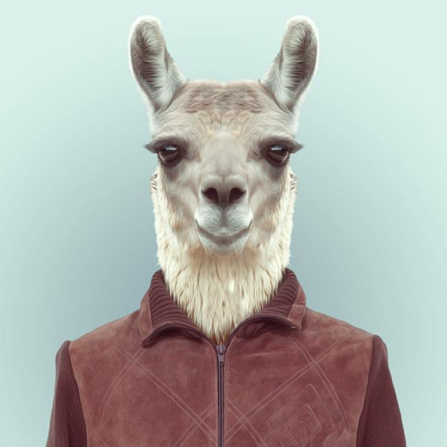 llama-yago-partal-zoo-portraits.jpg