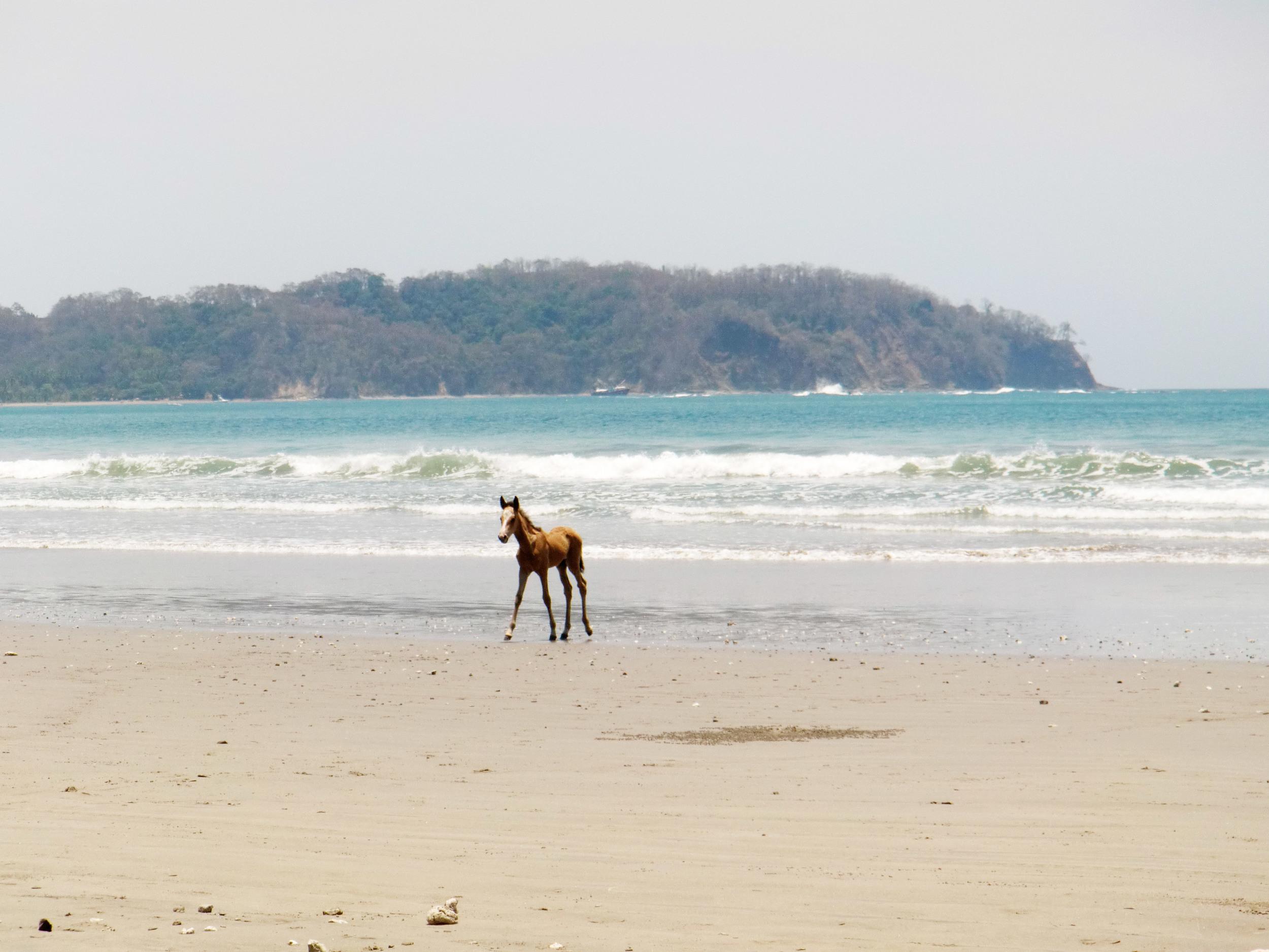 Playa Samara, Costa Rica ©Ty Govaars