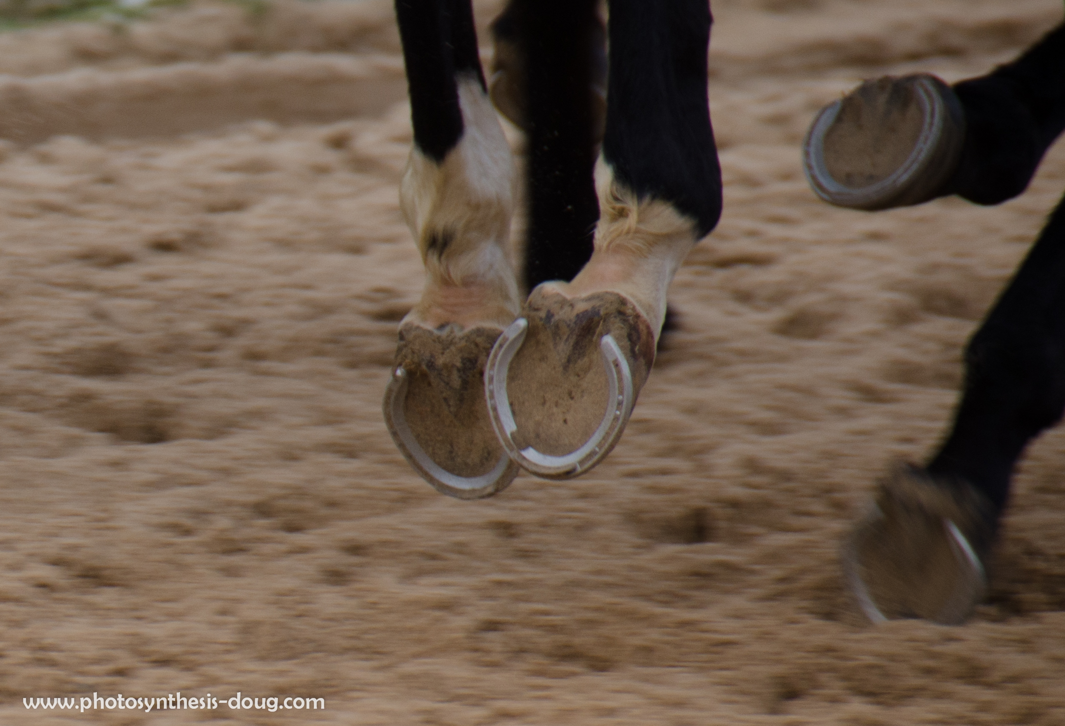 Horses running, Merryland Farm, MD, 2013
