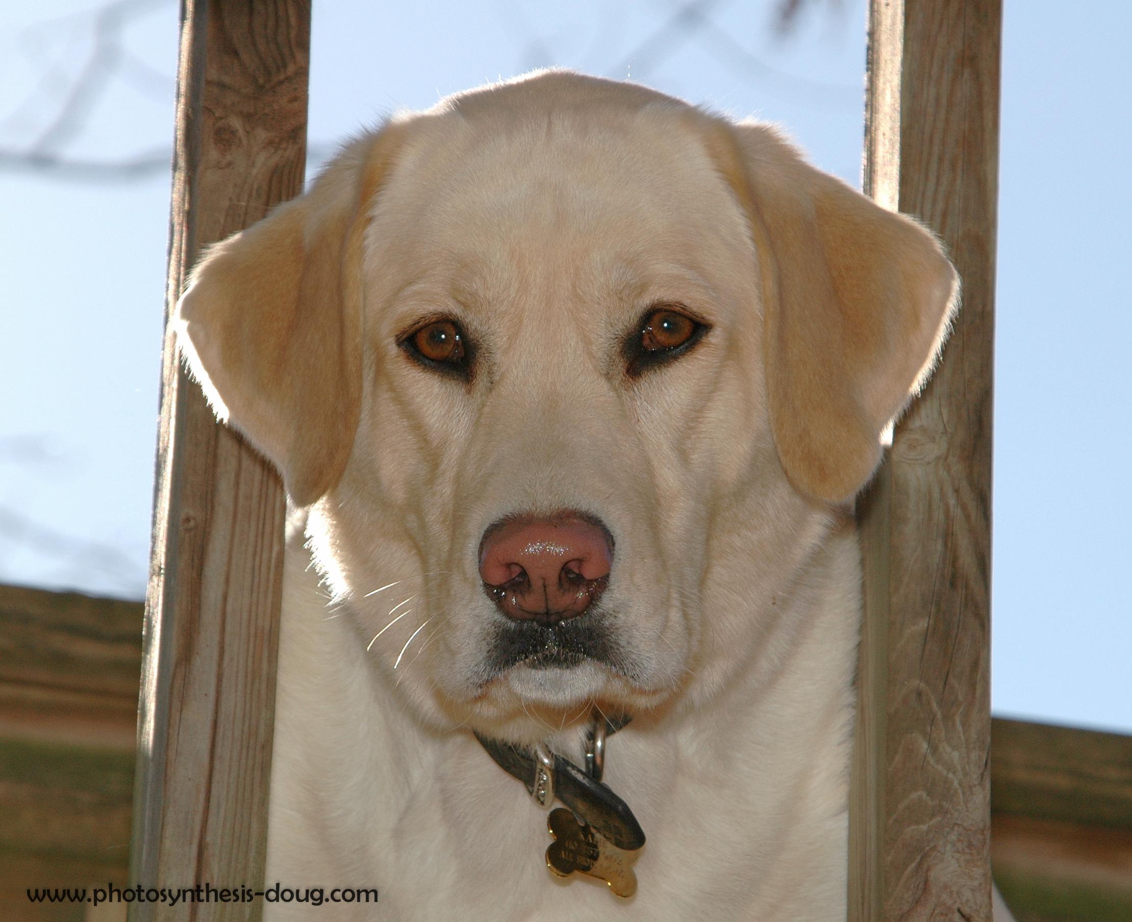 Kadie, 2005