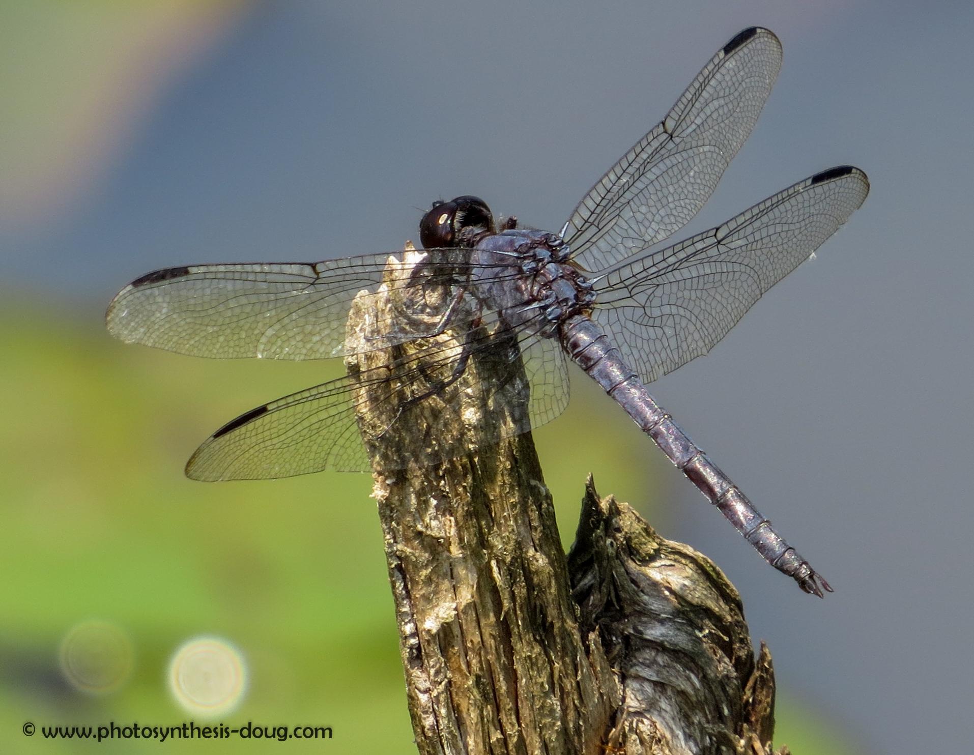 dragonfly-3100.jpg