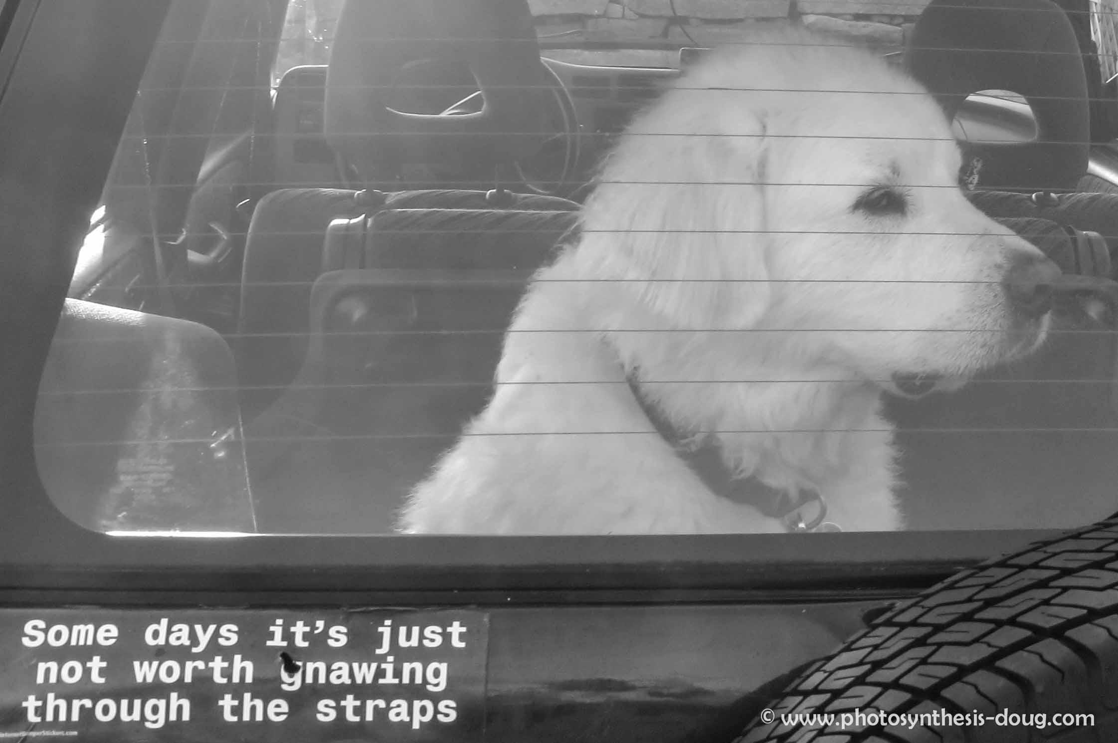 w-Camden dog-4110.jpg