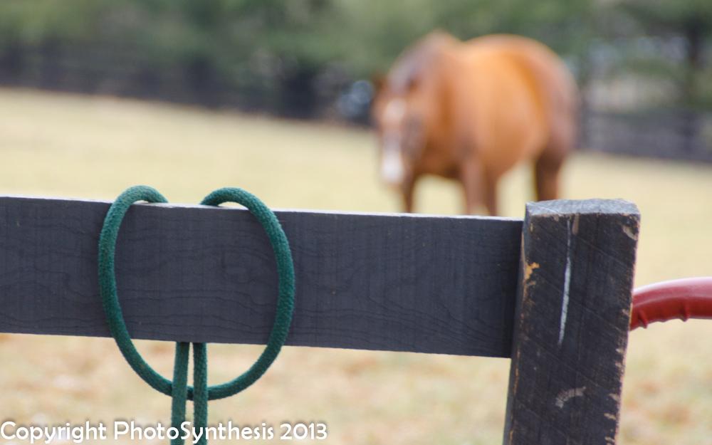 Alice and farm-0665.jpg