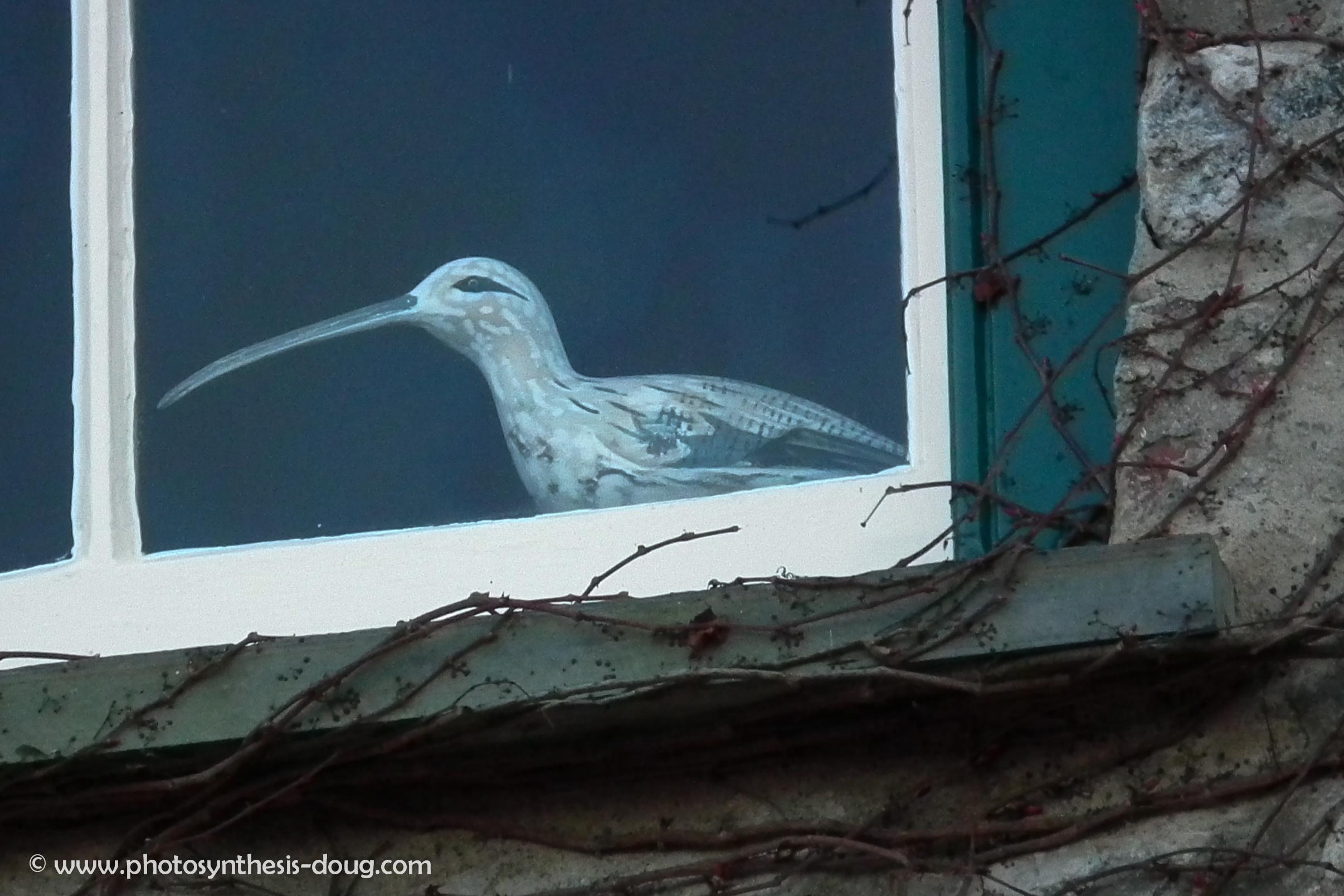 an ibis-7880.jpg