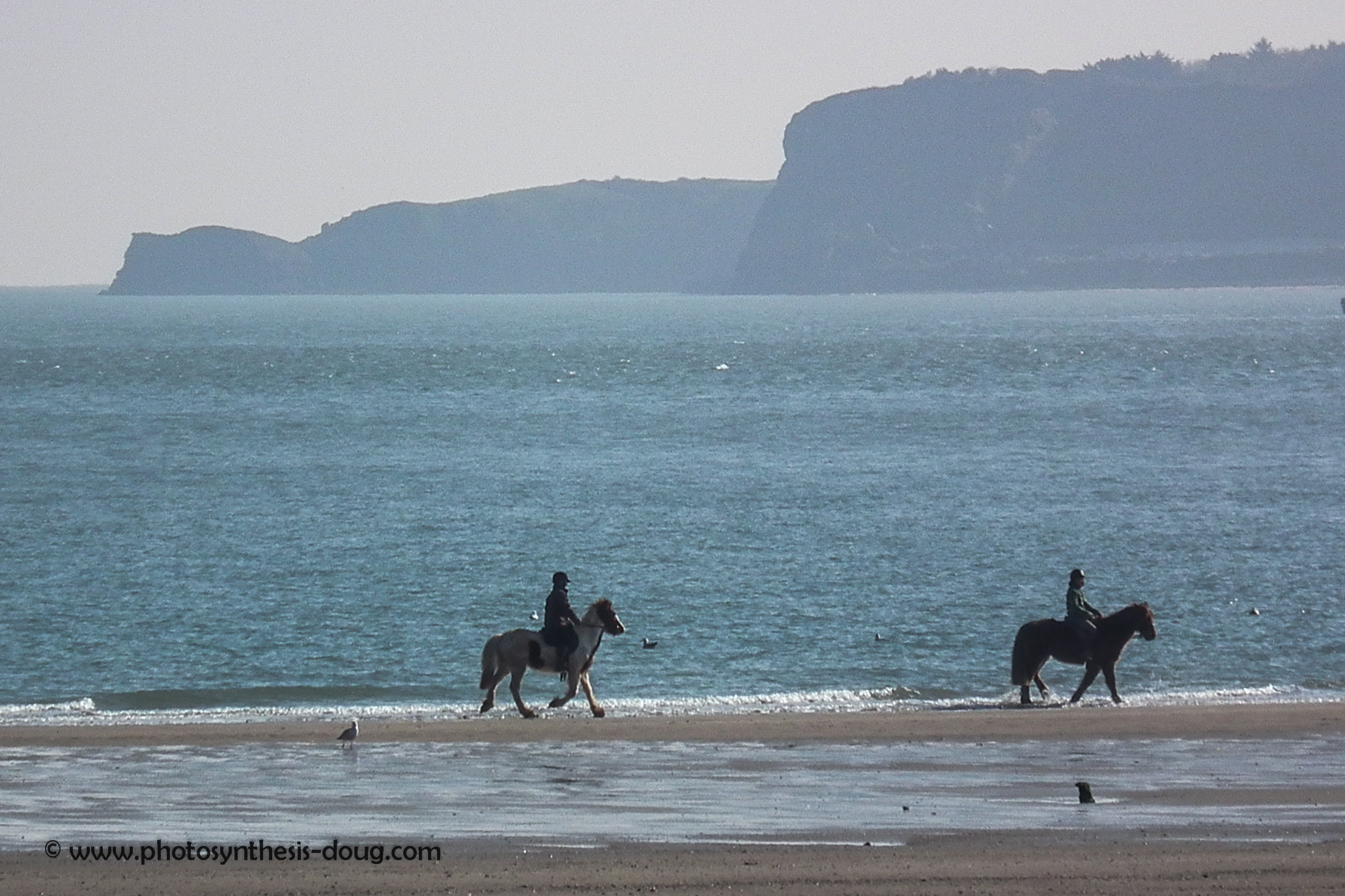 horses on Tenby beach-8252.jpg