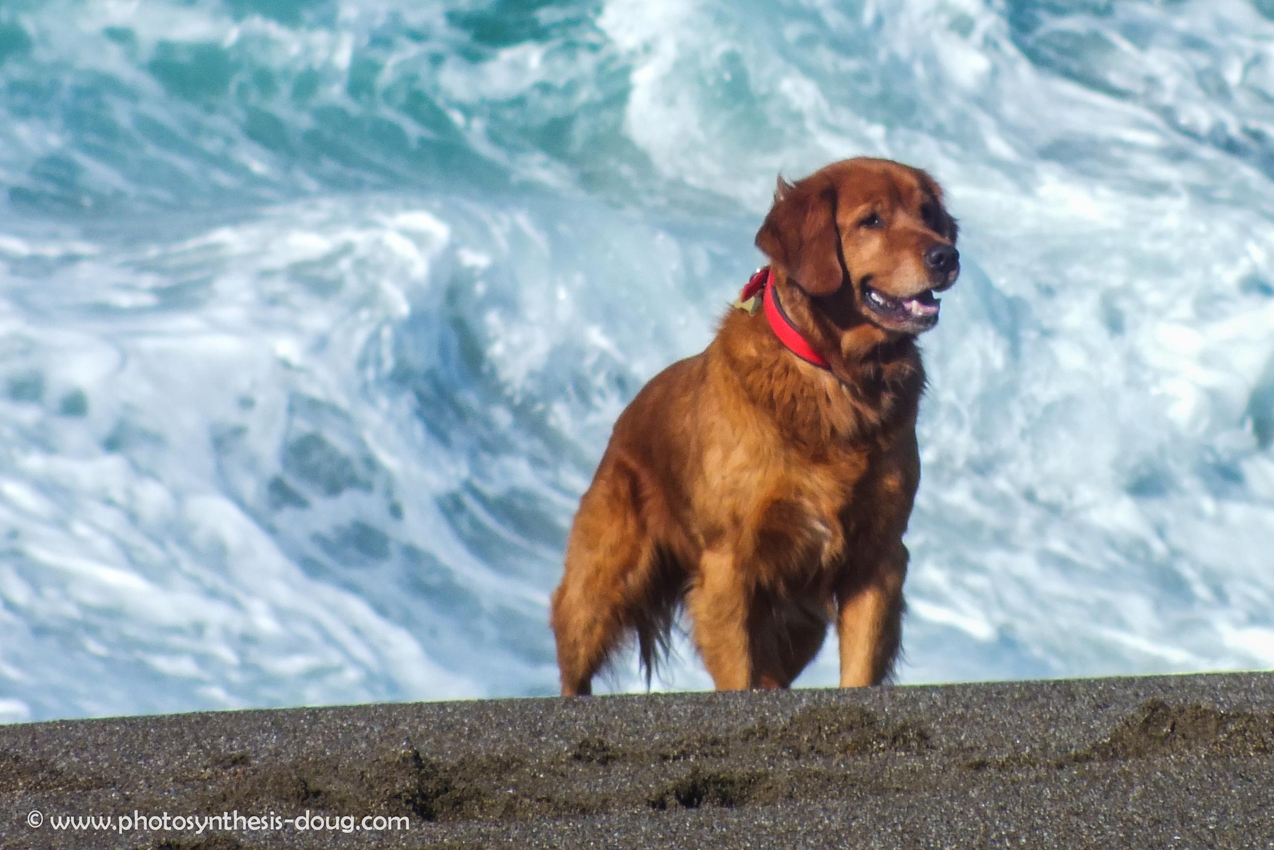 Point Reyes dog-7467.jpg