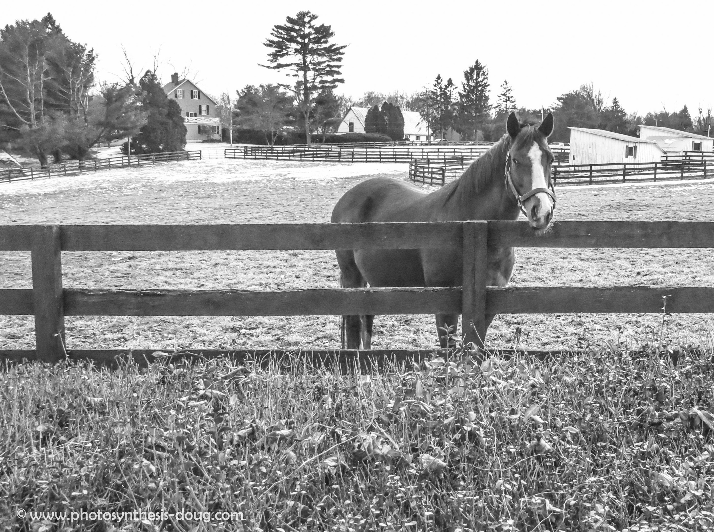 horse-6582.JPG