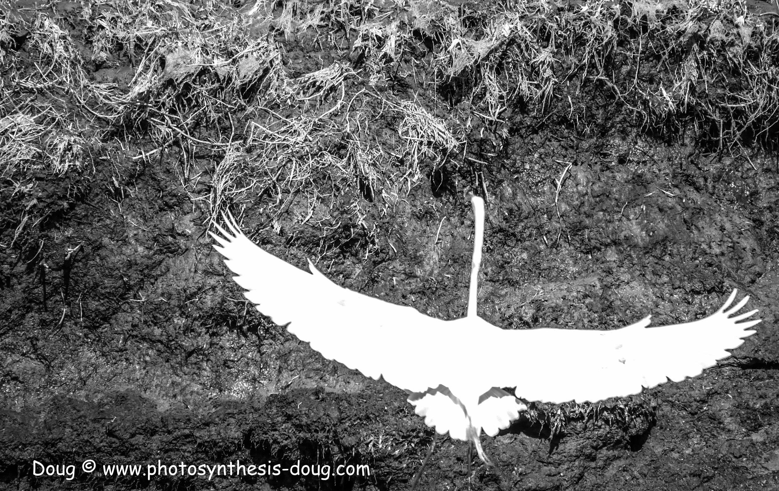 Bombay Hook birds-1030073.JPG