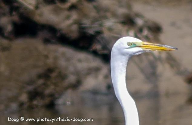 Bombay Hook birds-1030077.JPG