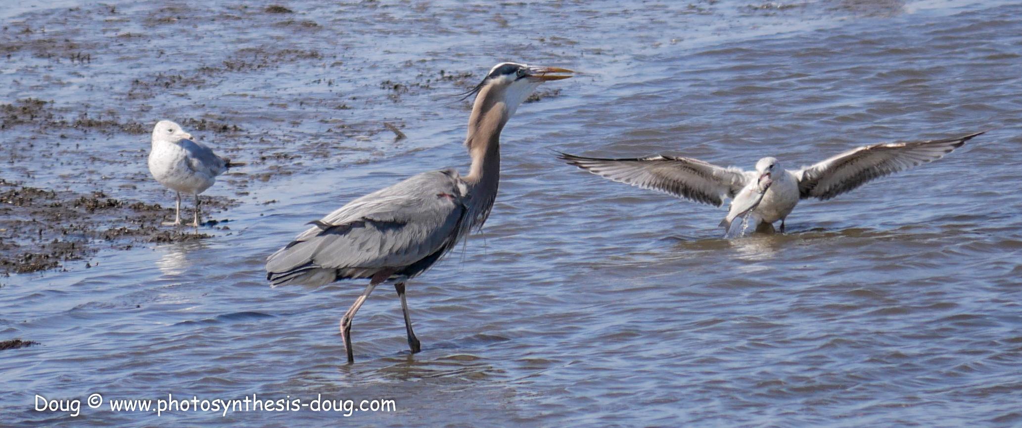 Bombay Hook birds-1030099.JPG