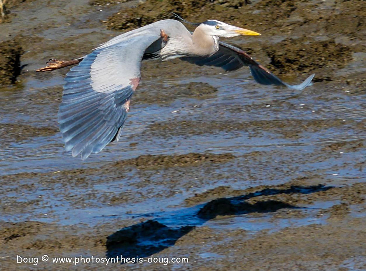 Bombay Hook birds-1030200.JPG