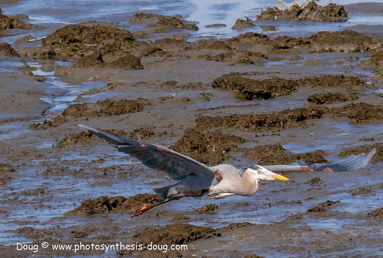 Bombay Hook birds-1030198.JPG