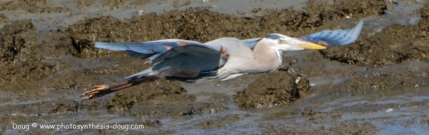 Bombay Hook birds-1030203.JPG
