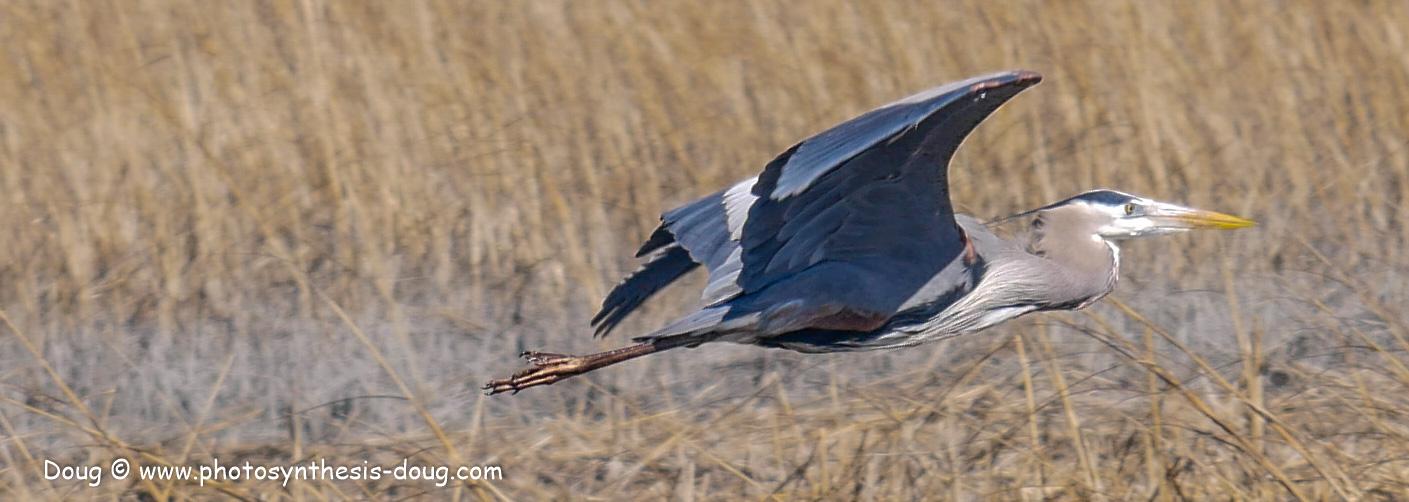 Bombay Hook birds-1030212.JPG
