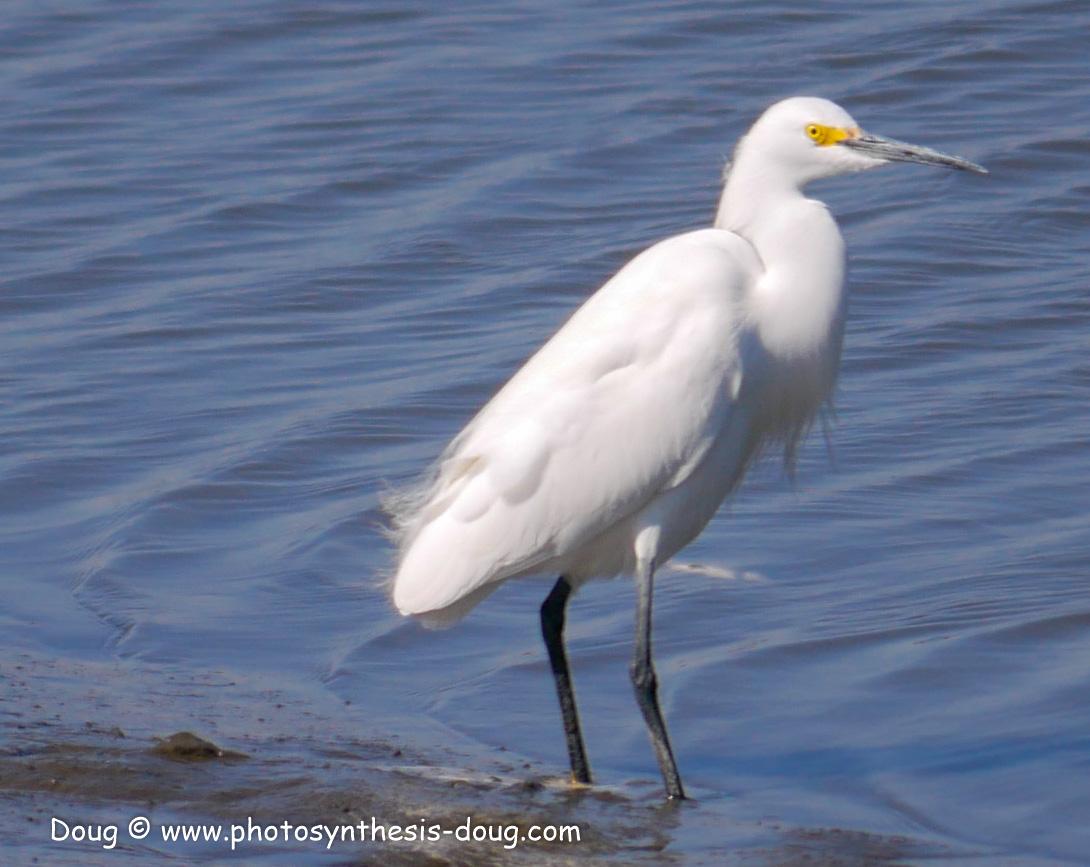 Bombay Hook birds-1030230.JPG