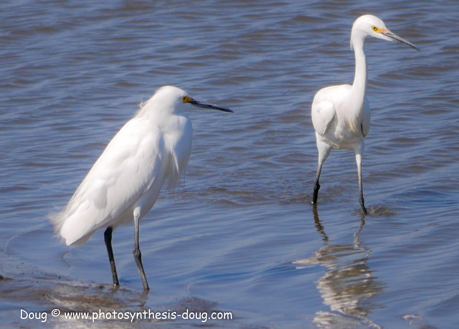 Bombay Hook birds-1030238.JPG