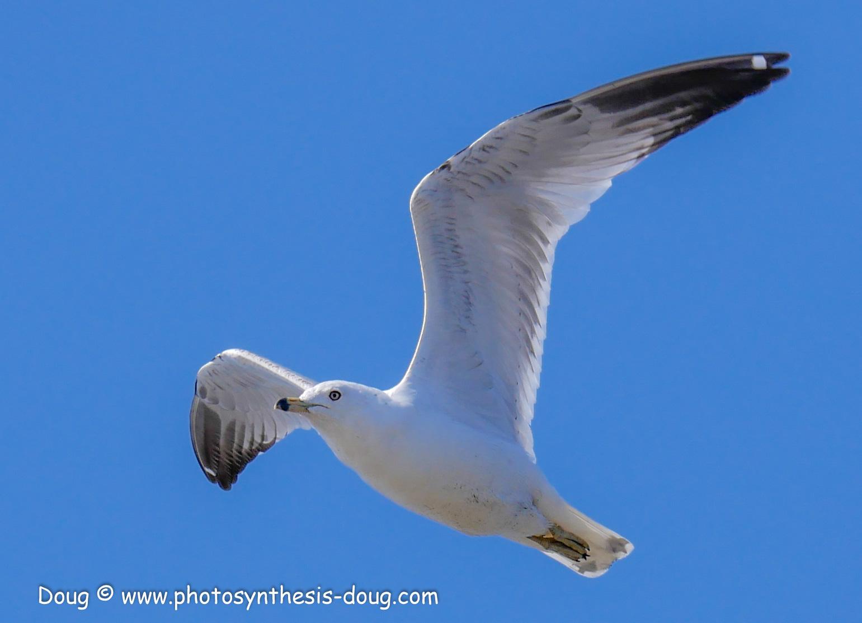 Bombay Hook birds-1030120.JPG