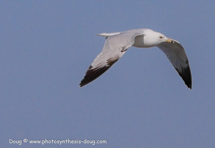 Bombay Hook birds-1030124.JPG
