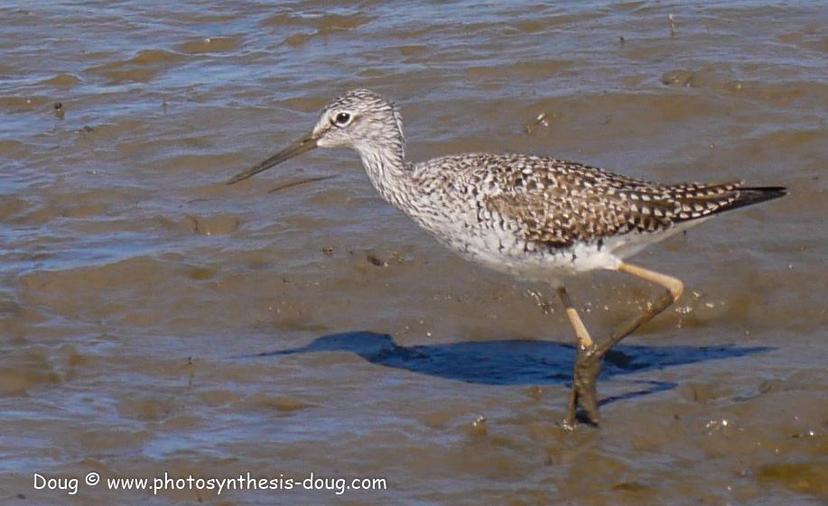 Bombay Hook birds-1030290.JPG