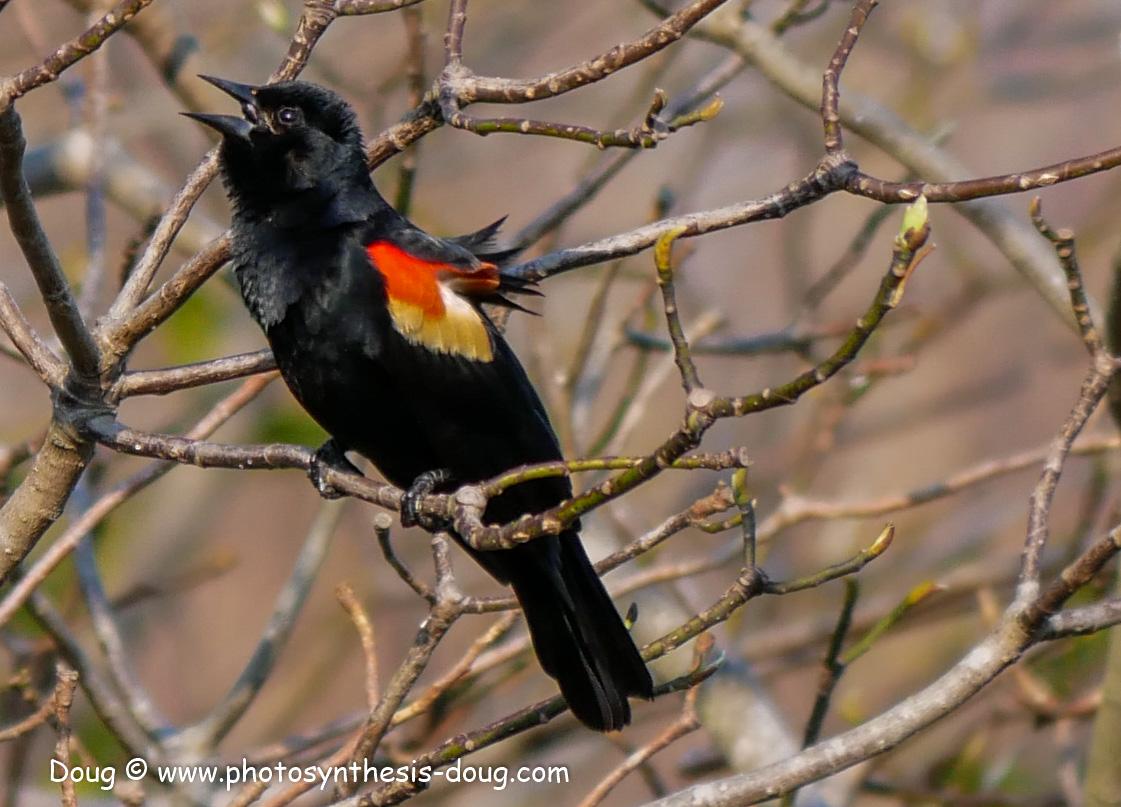 Bombay Hook birds-1030405.JPG